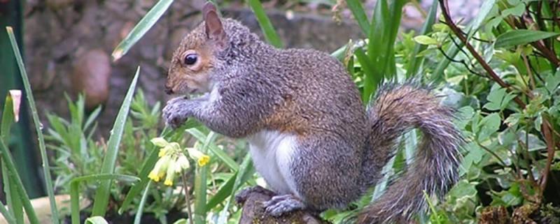 Wildlife at Carrwood Park